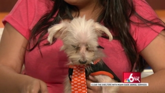 Clear The Shelters: Pet Wellness Month