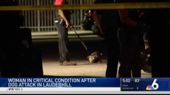 Woman in Critical Condition After Dog Attack in Lauderhill