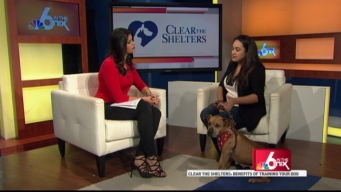 Clear the Shelters: Training Your Pooch