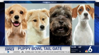 Four Dogs From Miami Taking Part in Annual 'Puppy Bowl'