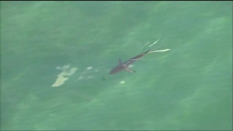 Sharks Seen Swimming Off Broward County Coast