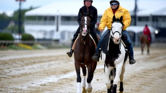 Preakness: Improbable, War of Will Among Horses to Watch