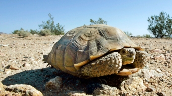Search for Lost Ohio Tortoise May Have Saved Owner's Sister