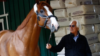 Trainer Sees Parallels Between Justify and American Pharoah