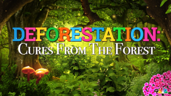 Deforestation Threatens Some of Earth's Natural Cures