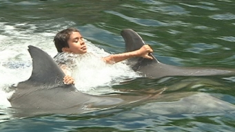 Cancer Survivors and Patients Swim With Dolphins