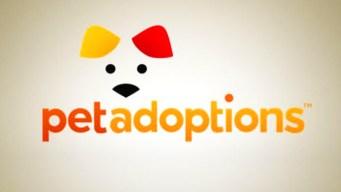 "Pet Adoptions: ""Sheba"""