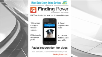 App Uses Facial Recognition To Bring Pets Home