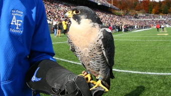 Air Force Mascot Falcon Improving After Injury at West Point