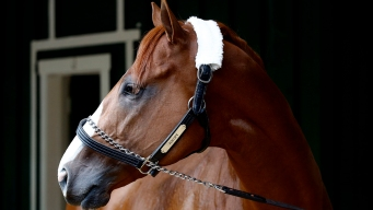 Justify Eyes Preakness Win on Quest for Triple Crown