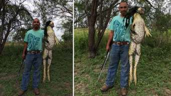Is This South Texas 'Monster Frog' Real?