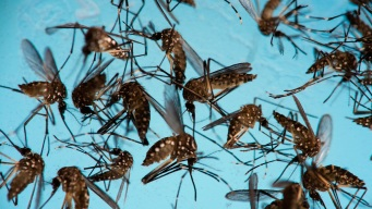 Zika No Longer Emergency, Still 'Enduring' Threat: WHO