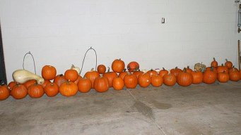 Police Post 'Pumpkin Lineup' After Stolen Squash Bust
