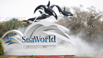 SeaWorld: Beluga Rescued Off Alaska Thrives at Theme Park