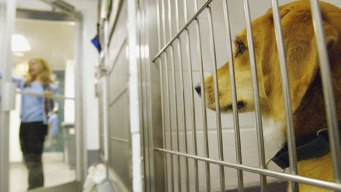 Miami-Dade Animal Services Adoption Fees Waived