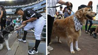 Over 1K Good Dogs Help White Sox Set World Record