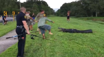 Man Bit by 10-Foot Alligator at Clearwater Park