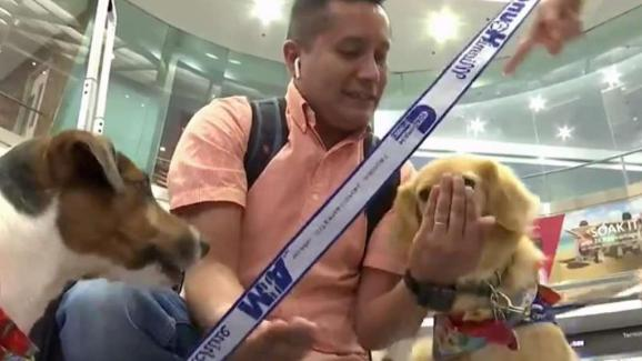 Therapy Dogs To Greet Passengers At Mia Nbc 6 South Florida