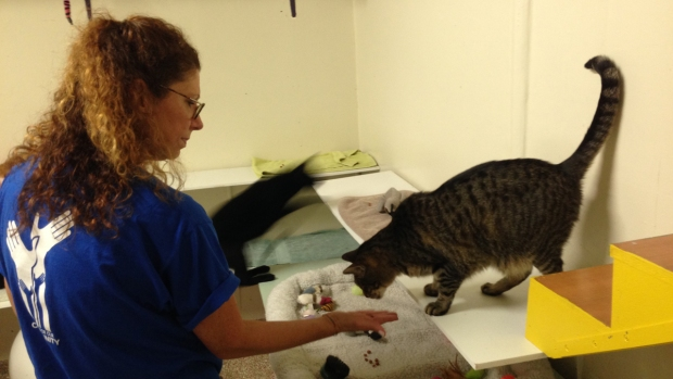 NBC 6 Caring for Our Community: Abandoned Pet Rescue