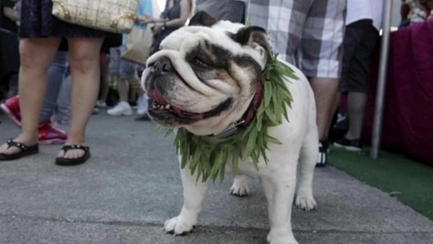 [DGO] Marijuana-Related Pet Poisonings on the Rise