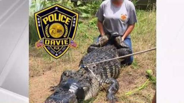 [MI] Body of Woman Attacked by Alligator Found