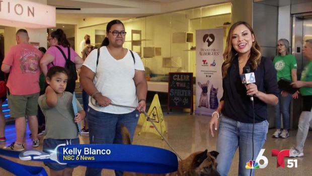 [MI] Clear The Shelters 2019 Underway in South Florida