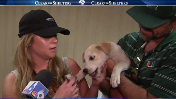 Clear The Shelters Sees Hundreds of Pets Find Homes