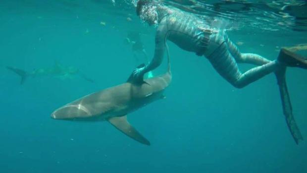 [MI] Close Encounters: Tour Gives Up Close Look at Sharks