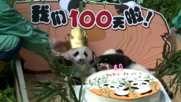 [NATL-DFW] Cute Pandas Celebrate 100 Days