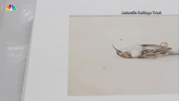 [NATL] 118-Year-Old Painting Found in Antarctica