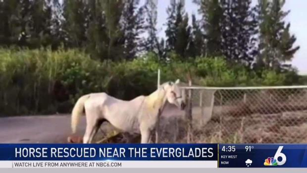 [MI] Emaciated Horse Rescued Near the Everglades