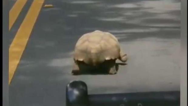[MI] Florida Deputy Gets Caught Behind Tortoise in Road