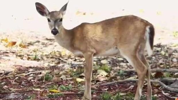 [MI] Florida Wildlife and its Resilency