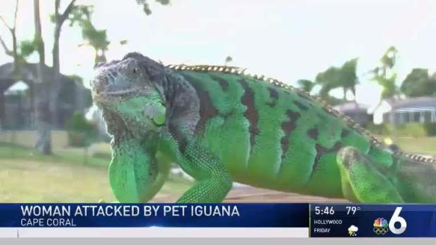 Florida Woman Attacked by Pet Iguana