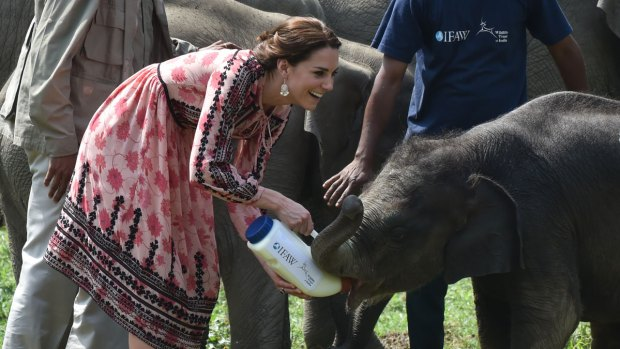[NATL] Will and Kate Feed Orphaned Elephants and Rhinos in India