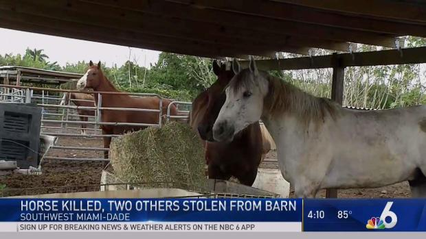 [MI] Horse Killed, 2 Others Stolen From Barn in SW Miami-Dade