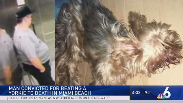 [MI] Man Pleads Guilty to Killing Pet Yorkie