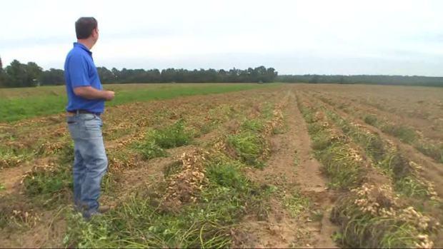 [NATL] Hurricane Matthew Threatens North Carolina Peanut Harvest