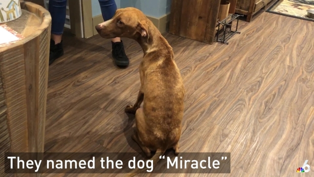 'Miracle' Dog That Survived Hurricane Dorian to Meet New Adoptive Family