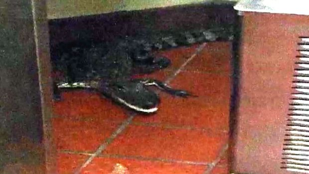 [NATL] Man Throws Live Alligator Into Wendy's Drive-Thru
