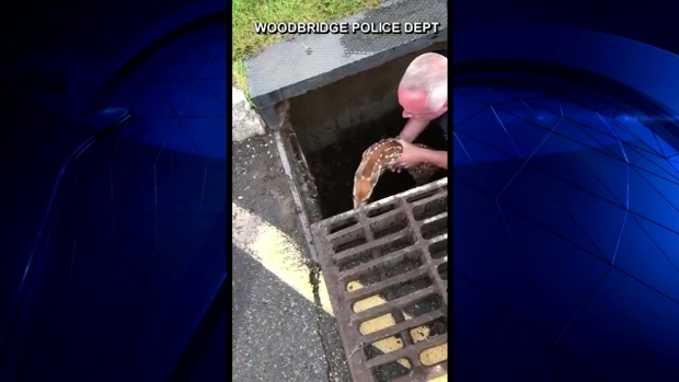 [NATL-DFW] Caught on Video: Officer Saves Deer From Storm Drain