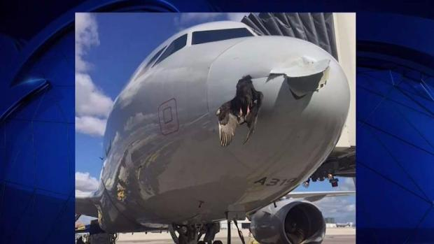 [MI] Plane Lands in Miami After Hitting Bird