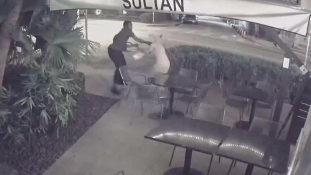 [MI] Search for Thief Behind Violent Miami Beach Purse Snatching