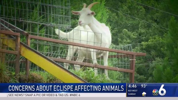 [MI] Store Owner Concerned About 'Alien' Goats During Eclipse
