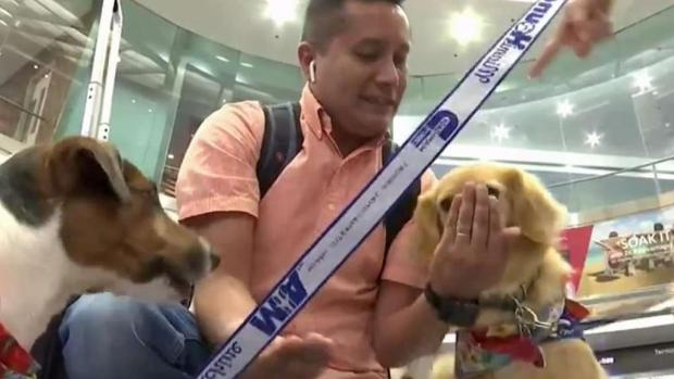 [MI] Therapy Dogs to Greet Passengers at MIA