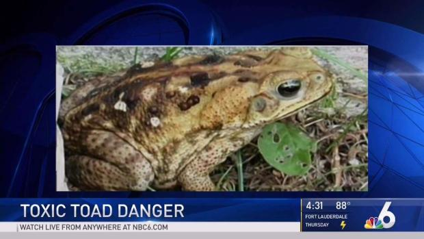 [MI] Toxic Toads a Deadly Danger to Pets