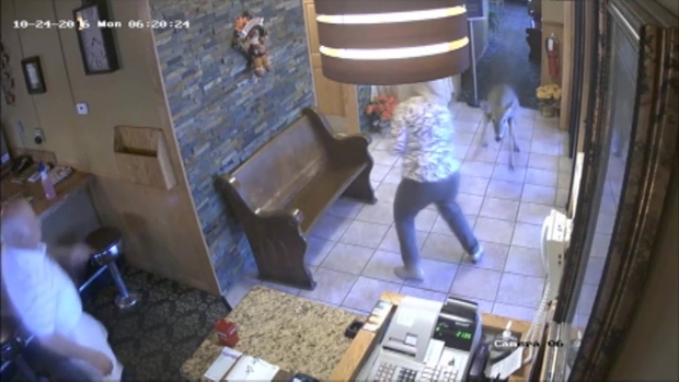 [CHI] Oh Deer! Video Shows Deer Crashing Into Northwest Indiana Restaurant