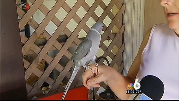 [MI] Parrot Saves Fort Lauderdale Family From Fire