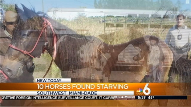 [MI] 10 Malnourished Horses Rescued in Southwest Miami-Dade