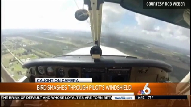 [MI] Bird Crashes Through Plane's Windshield Near Fort Myers